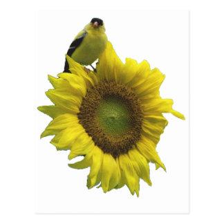 Cartão Postal Pássaro em um girassol