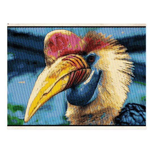 Cartão Postal Pássaro Estranho