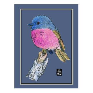 Cartão Postal Pássaro pequeno colorido do pisco de peito