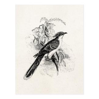 Cartão Postal Pássaro retro manchado excelente dos pássaros do
