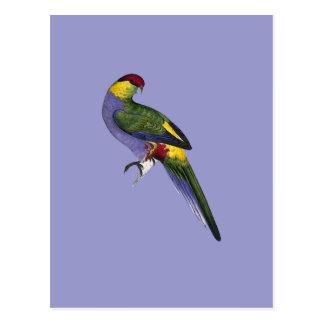 Cartão Postal Pássaro tampado vermelho do papagaio do Parakeet