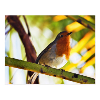 Cartão Postal Pássaro vermelho do peito do pisco de peito