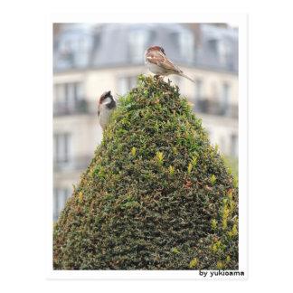 Cartão postal - pássaros