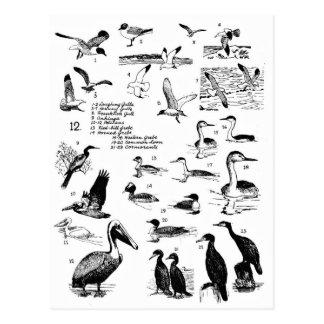 Cartão Postal Pássaros 12