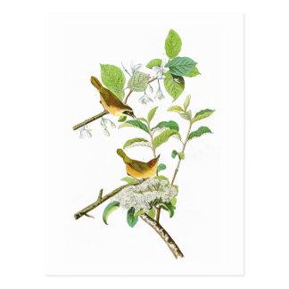 Cartão Postal Pássaros Amarelos-breasted América de John Audubon