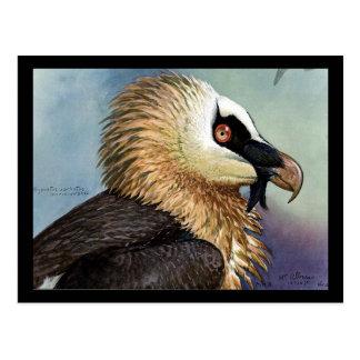 Cartão Postal Pássaros Arte-Abyssinian 11 de Chicago do