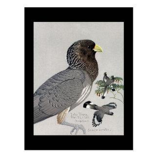 Cartão Postal Pássaros Arte-Abyssinian 14 de Chicago do