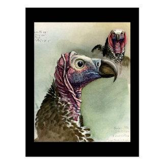 Cartão Postal Pássaros Arte-Abyssinian 15 de Chicago do