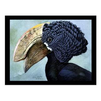 Cartão Postal Pássaros Arte-Abyssinian 16 de Chicago do