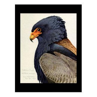 Cartão Postal Pássaros Arte-Abyssinian 18 de Chicago do