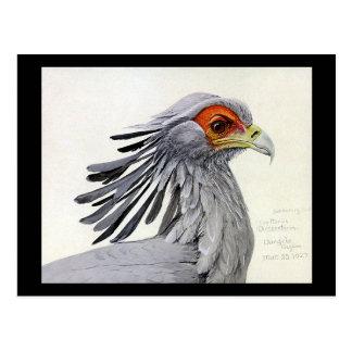 Cartão Postal Pássaros Arte-Abyssinian 19 de Chicago do
