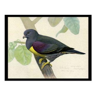 Cartão Postal Pássaros Arte-Abyssinian 1 de Chicago do