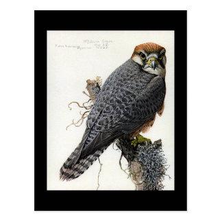 Cartão Postal Pássaros Arte-Abyssinian 2 de Chicago do