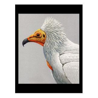 Cartão Postal Pássaros Arte-Abyssinian 3 de Chicago do