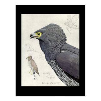 Cartão Postal Pássaros Arte-Abyssinian 6 de Chicago do