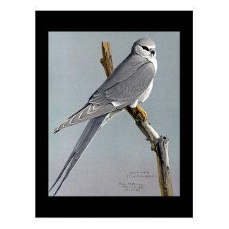 Cartão Postal Pássaros Arte-Abyssinian 8 de Chicago do