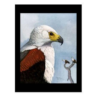 Cartão Postal Pássaros Arte-Abyssinian 9 de Chicago do