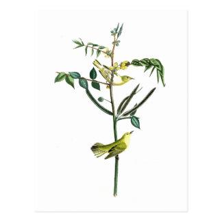 Cartão Postal Pássaros de John Audubon da toutinegra das