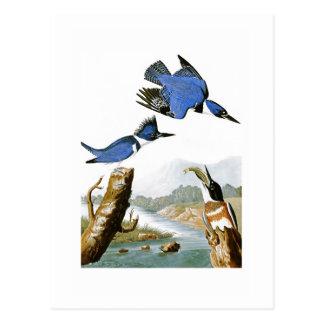 Cartão Postal Pássaros de John Audubon do martinho pescatore