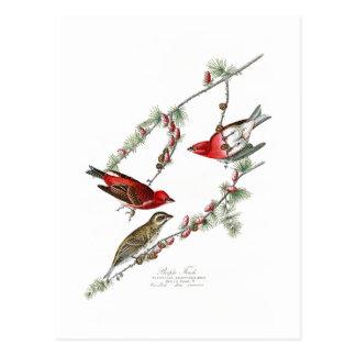 Cartão Postal Pássaros de John James Audubon do passarinho roxo