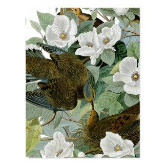 Cartão Postal Pássaros de John James Audubon do pombo de