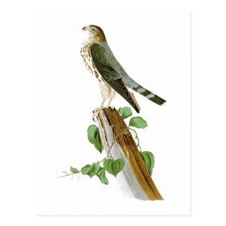 Cartão Postal Pássaros de Le Pequeno Caporal John Audubon de