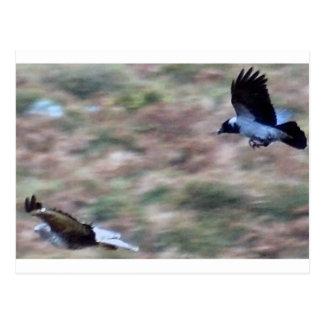 Cartão Postal pássaros de rapina
