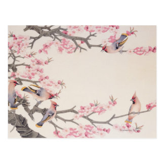 Cartão Postal Pássaros do canto no primavera