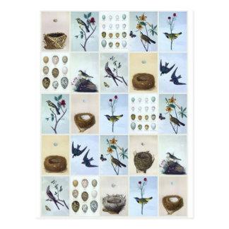 Cartão Postal Pássaros e ninhos