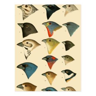 Cartão Postal Pássaros norte-americanos