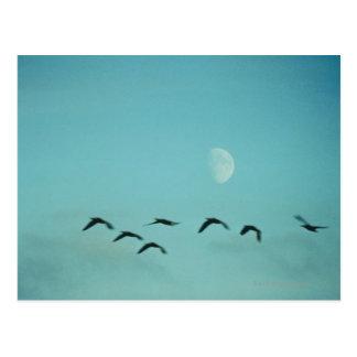 Cartão Postal Pássaros pela lua