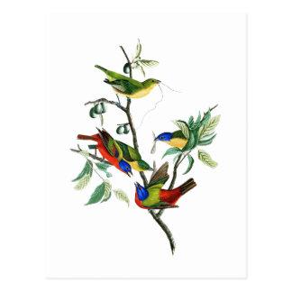Cartão Postal Pássaros pintados de John James Audubon do