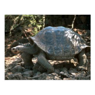 Cartão Postal Passeio Abóbada-Dado forma gigante da tartaruga