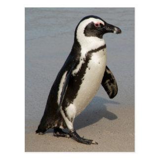 Cartão Postal Passeio africano do pinguim