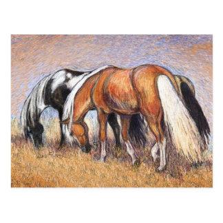 Cartão Postal Pastando cavalos