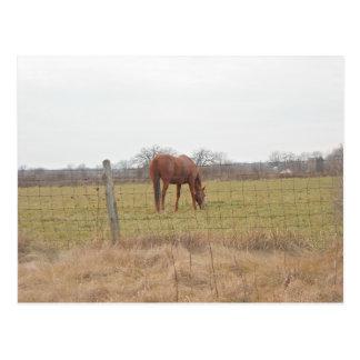 Cartão Postal Pastando cavalos da castanha do rancho