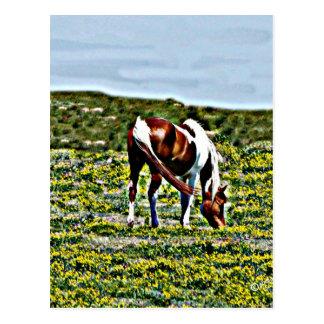 Cartão Postal Pastando o cavalo da pintura com flores amarelas
