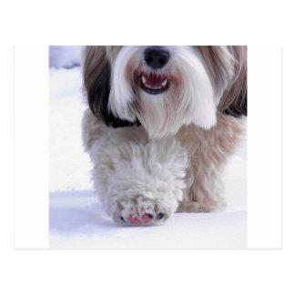Cartão Postal Pata macia bonito da neve de Terrier tibetano