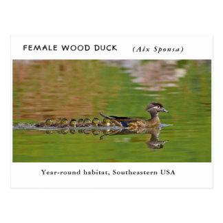 """Cartão Postal """"Pato de madeira fêmea"""" (com crianças)"""