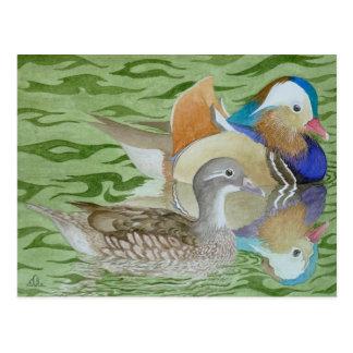 Cartão Postal Patos de mandarino em um lago