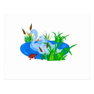 Cartão Postal Patos na água