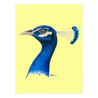 Cartão Postal Pavão:  Azul indiano