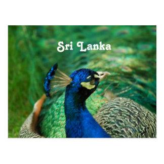 Cartão Postal Peafowl de Sri Lanka