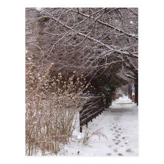 Cartão Postal Pegadas na neve