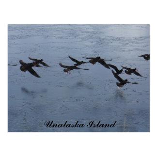 Cartão Postal Pegas-do-mar em vôo, ilha de Unalaska
