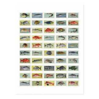 Cartão Postal Peixes africanos