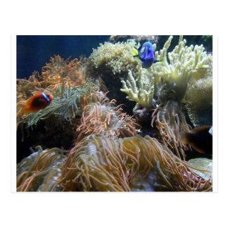 Cartão Postal Peixes do aquário