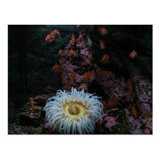 Cartão Postal Peixes do ouro e anêmona de mar