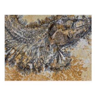 Cartão Postal Peixes fósseis
