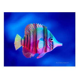 Cartão Postal Peixes tropicais